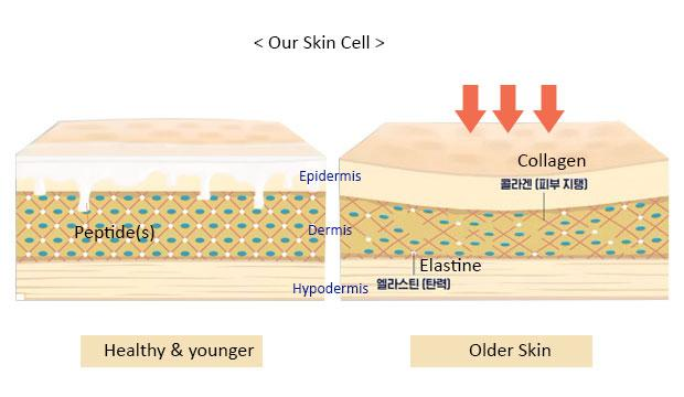 skin_01_1
